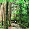ほぼ東海道を歩く旅⑧【箱根湯本~芦ノ湖】