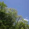 姉川上流 新緑