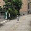 「庭いじりの贅沢」「鯉が鷺に食べられた。」(7)散歩 かわいいと大人気。