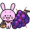 うさぎに葡萄をあげてはいけません。ぶどうの危険性は知っていますか?