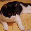今日の黒猫モモ&白黒猫ナナの動画ー688