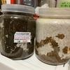 ニジイロクワガタの菌糸ビン交換