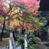 置賜の秋を訪ねる