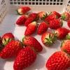 「いちご」を京都・滋賀近辺で直買できる「苺屋 Kirry's Berry キリーズベリー」【京都・観光情報】