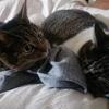 姉妹に体格差が出てきた話【猫の体長を測る】