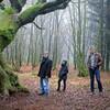 ブロセリアンドの森へ誘う🌲~AXN『フランス絶景ミステリー』