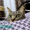 Pinterest使ってみて、自分はどういう写真が撮りたいのかを考える
