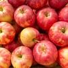 大人のりんご病?まだらな赤み、痒み、関節痛の症状が出た。