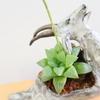 パサン山羊鉢 X「レツーサ」