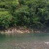 川湯温泉(和歌山)での日帰りが一泊することになりました。