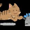 野良猫から感染するリスクもあるトキソプラズマ感染症 #寄生虫 #感染症 #妊婦 #野良猫