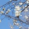 春分、季節の味わいと心のケア