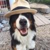 """愛犬の名前は""""シュート""""漢字で書くと「終止」なのですが、果たして、その理由(わけ)は❓"""