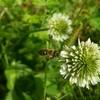 淡路島 ミツバチとはちみつの不思議を知ろう☆ワークショップのご案内です