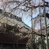 三春滝桜 駅からのシャトルバス運行中止