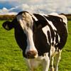 牛の乳しぼり体験ができる牧場  ~愛知県・岐阜県・三重県・静岡県~