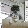 猫雑記 ~むくの重圧~