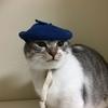 3coinsのペットグッズ。ベレー帽が可愛い。