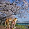 花いっぱいの春休み  (第1885話)