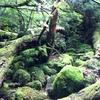《屋久島》白谷雲水峽の写真撮影してきました