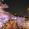 (私が)行ってみたい桜名所10か所を調べてみました(*^^*)後編!