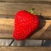 東京都内のおすすめイチゴ狩りスポット【くりりんベリー】に行ってみた感想