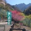 春の尾ノ内渓谷