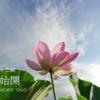 二十四節気七十二候62 「小暑 鷹乃学習」 (2016/7/17)
