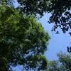 今日の空と俺のオクタンとコイキング