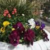 連休は青空と春の花