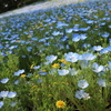 花畑の撮影のコツ!名古屋港ワイルドフラワーガーデン「ブルーボネット」撮影レポ