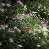 夏の花と秋の花のハーモニー