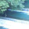 箱根町湯本の早川とツバメ