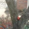 庭への来訪者