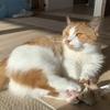 見よ。愛猫の脚線美を!(だが男だ)