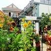 カンボジア シェムリアップ ホテル紹介②「Asanak D'Angkor Boutique Hotel」