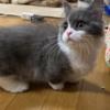 ☆猫 & 絶景 伊勢神宮 鳥羽