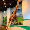 zoo caféさんでりんごのケーキ🍎多摩動物園 ♪