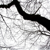 発達障害の冬季型うつ病(SAD)対処術