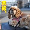 【四国水族館】2020年3月20日のグランドオープン延期!!