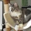 猫の道具 ~消される空気清浄機~