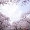 東京都競馬株式会社 小林牧場 その三 〜チューリップ・桜ライド 2019 ②〜