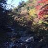 【那須塩原】塩原渓谷歩道『回顧コース』の難易度は高め!紅葉の見頃は…?(2016/11/5撮影)