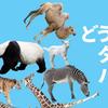 【競馬予想】阪神JFを予想します〈新興勢力は勝てるのか?〉