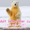 【週末英語#182】英語で熊は「Bear」だけど、大人の熊や小熊はなんて言う?
