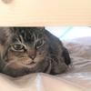 多頭飼育崩壊の被害者猫さんたちの譲渡会開催&ローラちゃんの保護猫ウニピノちゃん