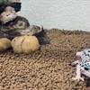 爬虫類、両生類たちのお家レイアウト(ビバリウム)