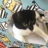 【猫のおもちゃ購入レビュー】「キャッチミーイフユーキャン2」がすごく重宝で2台目を購入!