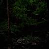 「ホタル」の撮影 2021年6月18日 (機材: LAOWA 17mm F1.8 MFT、OLYMPUS PEN Lite E-PL3、三脚 SLIK PRO804CF 、自由雲台 Velbon PH-263  )