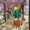 白井大町藤公園*藤の香りが心地良い、初夏の避暑スポット!